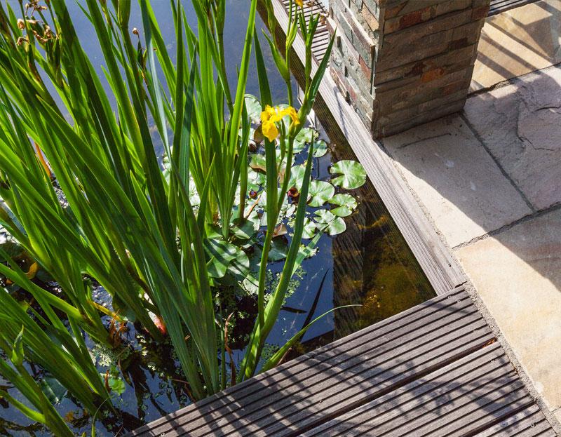 Teichbau und Terrasse Tulpe Garten- und Landschaftsbau
