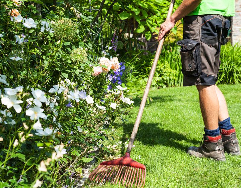 Pflege GartenAbo Artenpflege Tulpe Garten- und Landschaftsbau Lübeck