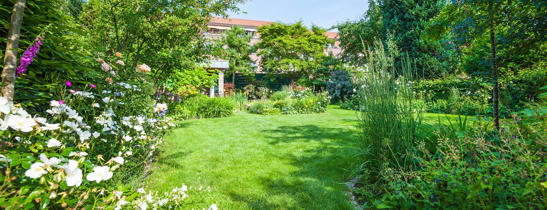 Pflanzen Tulpe Garten Und Landschaftsbau