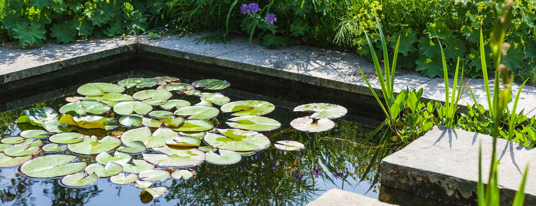 Teichbau Tulpe Garten- und Landschaftsbau